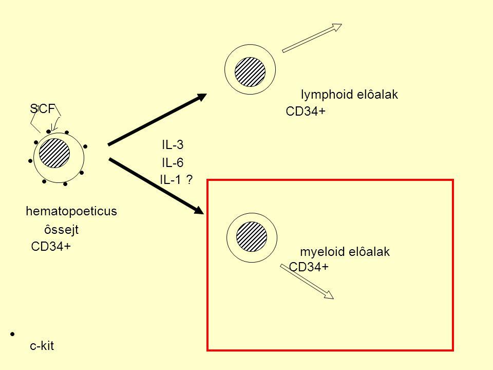 lymphoid elôalak SCF CD34+ IL-3 IL-6 IL-1 hematopoeticus ôssejt CD34+ myeloid elôalak CD34+ c-kit