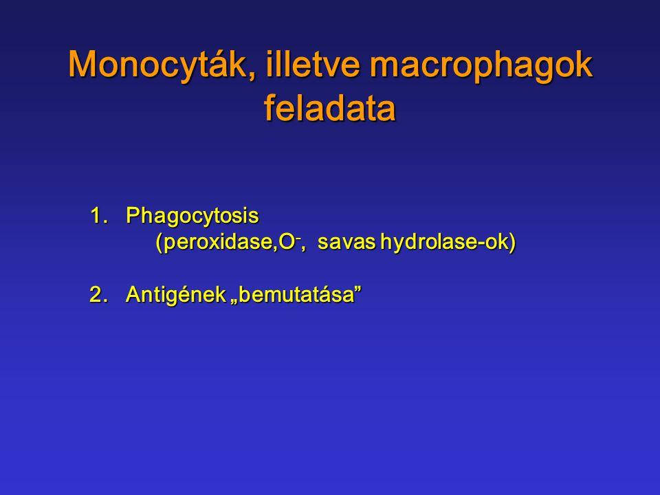 Monocyták, illetve macrophagok feladata