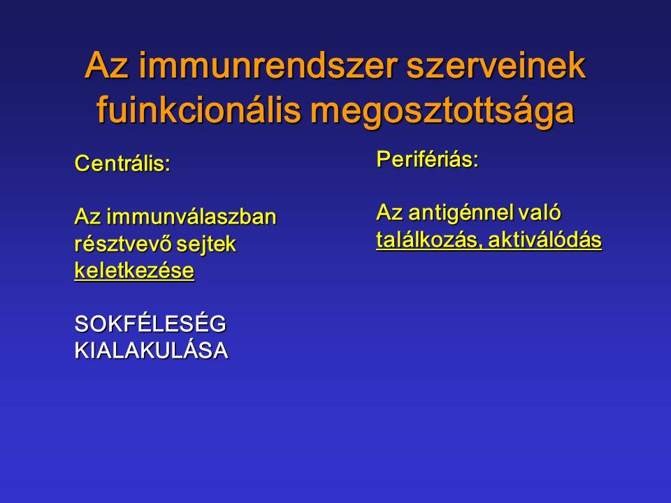 Az immunrendszer szerveinek fuinkcionális megosztottsága