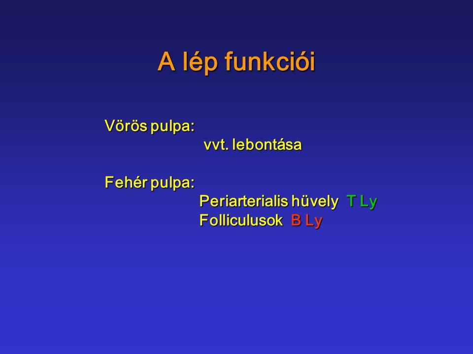 A lép funkciói Vörös pulpa: vvt. lebontása Fehér pulpa: