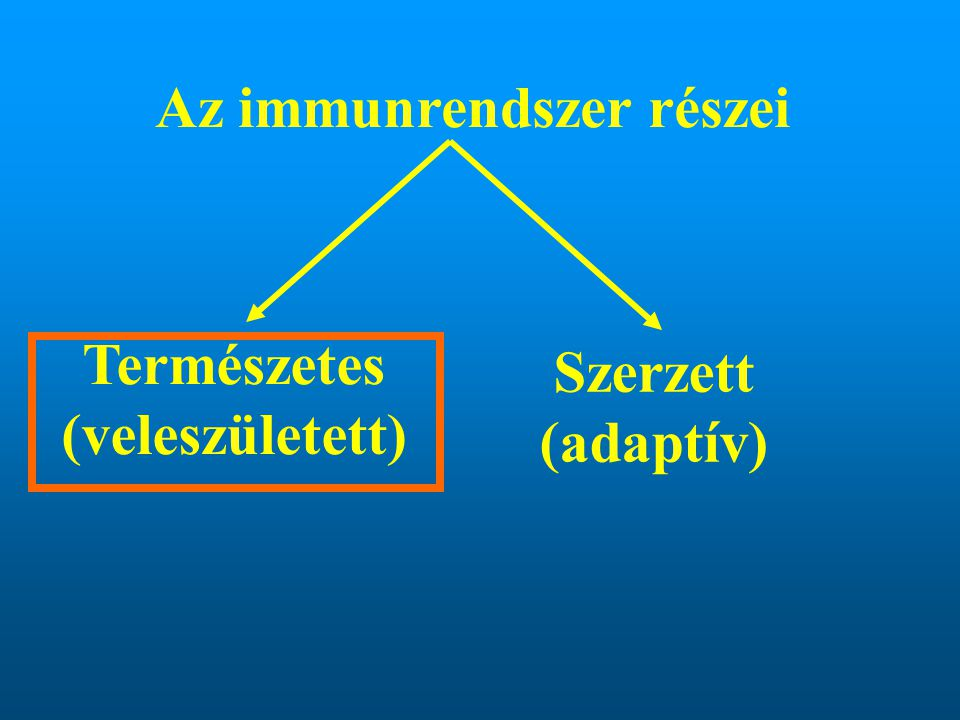Az immunrendszer részei Természetes (veleszületett)