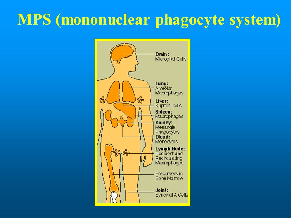 MPS (mononuclear phagocyte system)
