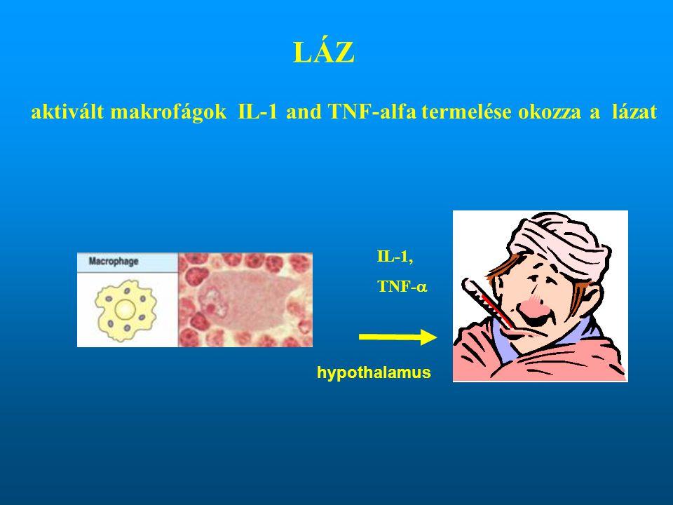 LÁZ aktivált makrofágok IL-1 and TNF-alfa termelése okozza a lázat