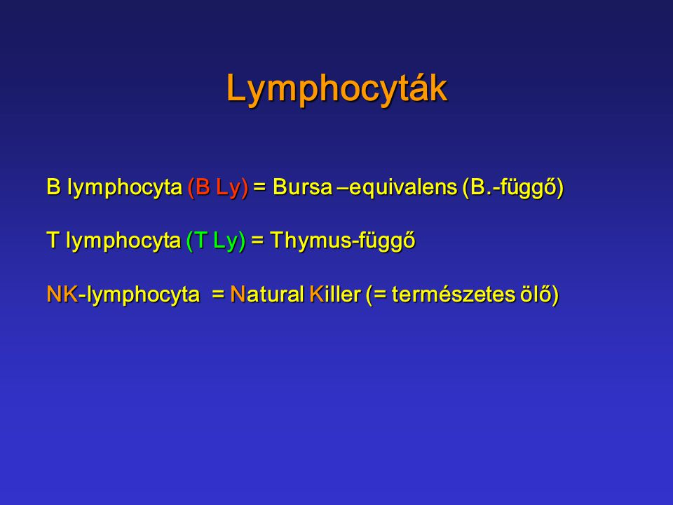 Lymphocyták B lymphocyta (B Ly) = Bursa –equivalens (B.-függő)