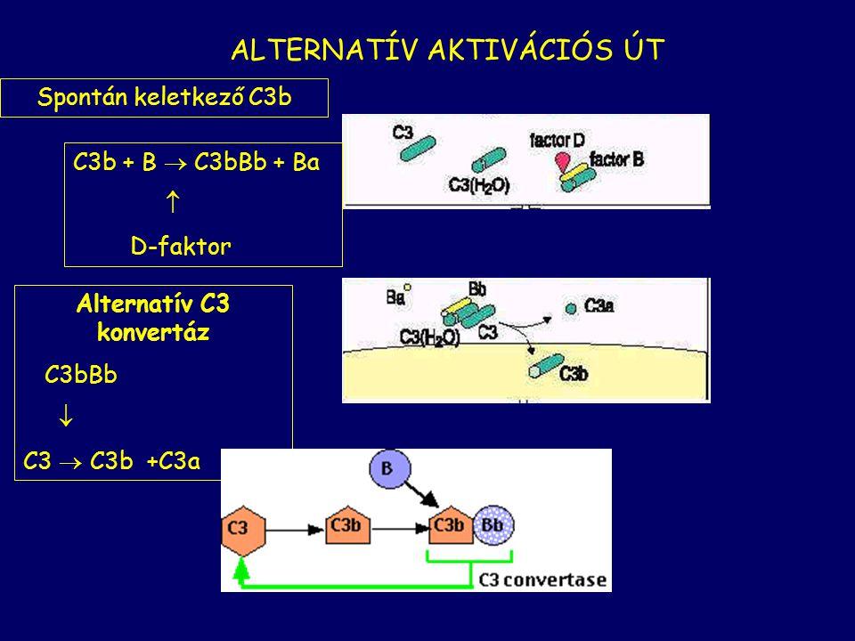 Alternatív C3 konvertáz