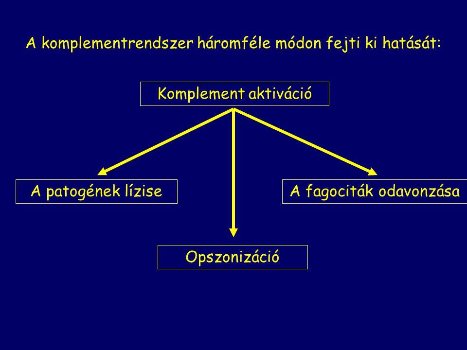 A komplementrendszer háromféle módon fejti ki hatását: