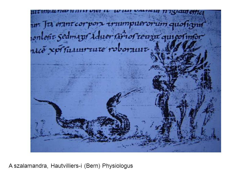A szalamandra, Hautvilliers-i (Bern) Physiologus