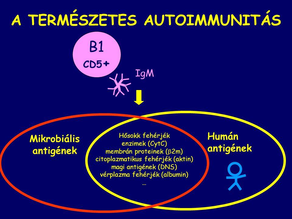 A TERMÉSZETES AUTOIMMUNITÁS Mikrobiális antigének