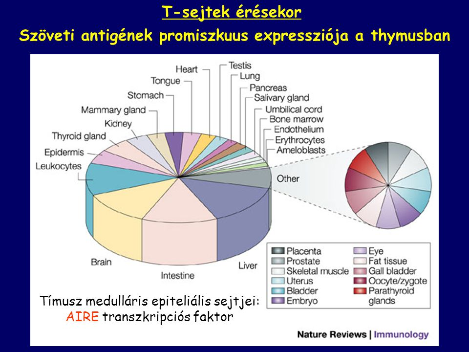 Szöveti antigének promiszkuus expressziója a thymusban