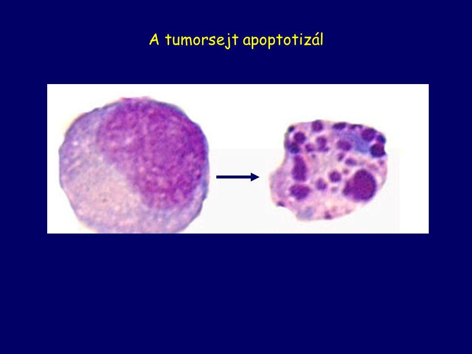 A tumorsejt apoptotizál