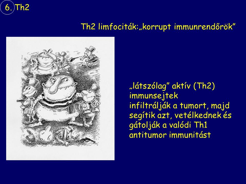 "6. Th2 Th2 limfociták:""korrupt immunrendőrök ""látszólag aktív (Th2) immunsejtek. infiltrálják a tumort, majd."