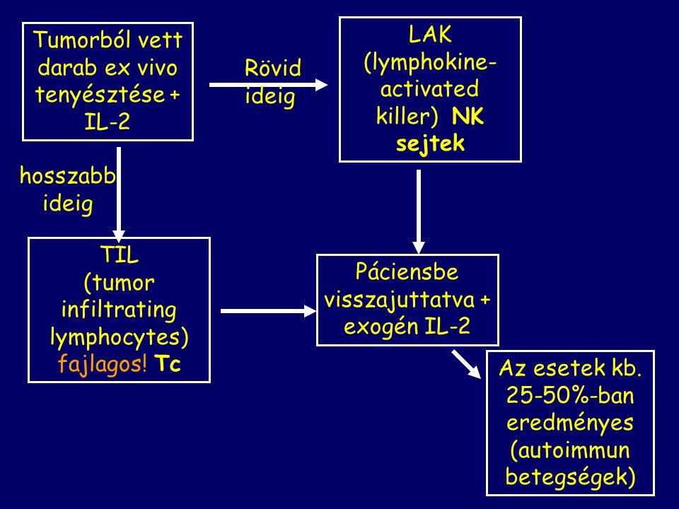 LAK (lymphokine-activated killer) NK sejtek