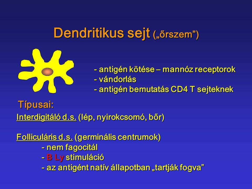 """Dendritikus sejt (""""őrszem )"""
