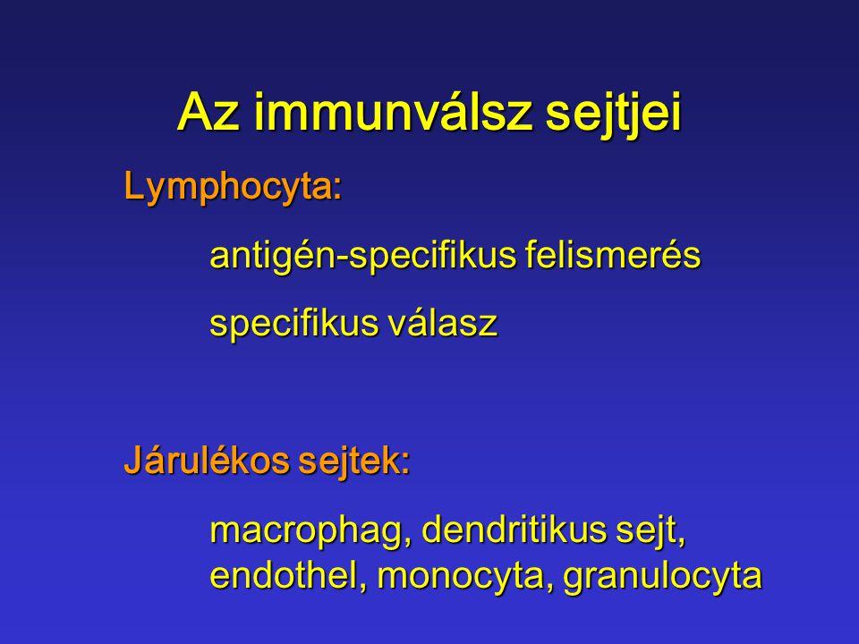 Az immunválsz sejtjei Lymphocyta: antigén-specifikus felismerés