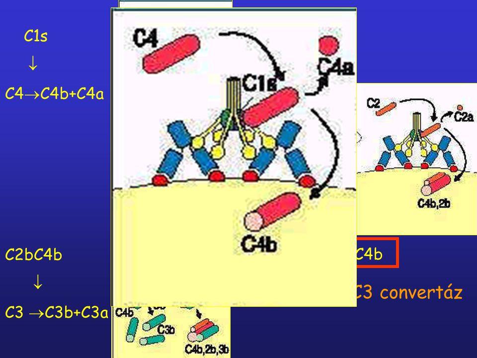 klasszikus C3 convertáz