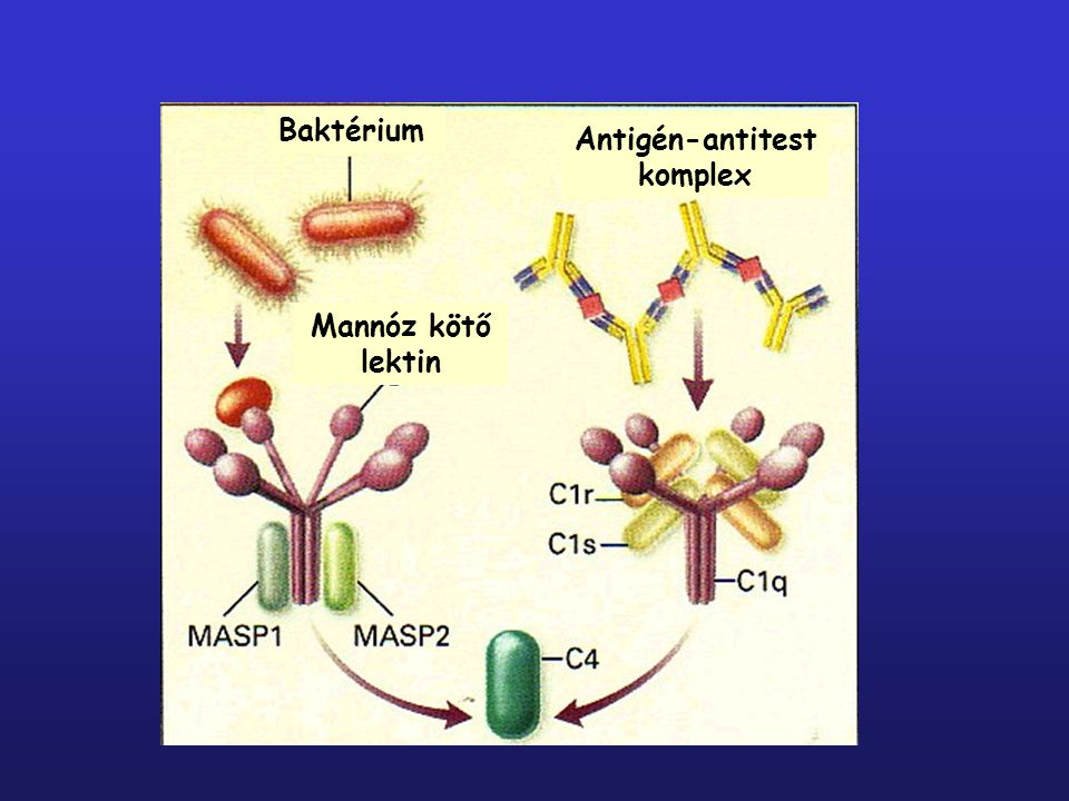 Antigén-antitest komplex