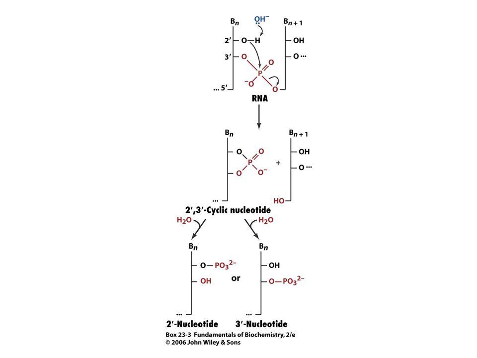 Az RNS kémiailag meglehetősen instabil molekula