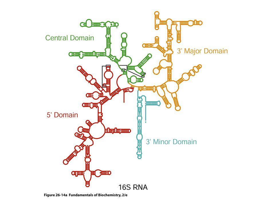 Az RNS-nek, szemben a DNS-sel, bonyolult háromdimenziós szerkezete lehet.