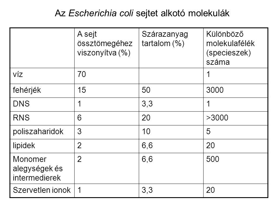 Az Escherichia coli sejtet alkotó molekulák
