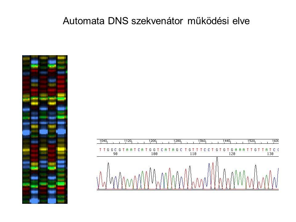 Automata DNS szekvenátor működési elve