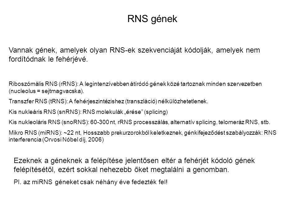 RNS gének Vannak gének, amelyek olyan RNS-ek szekvenciáját kódolják, amelyek nem fordítódnak le fehérjévé.
