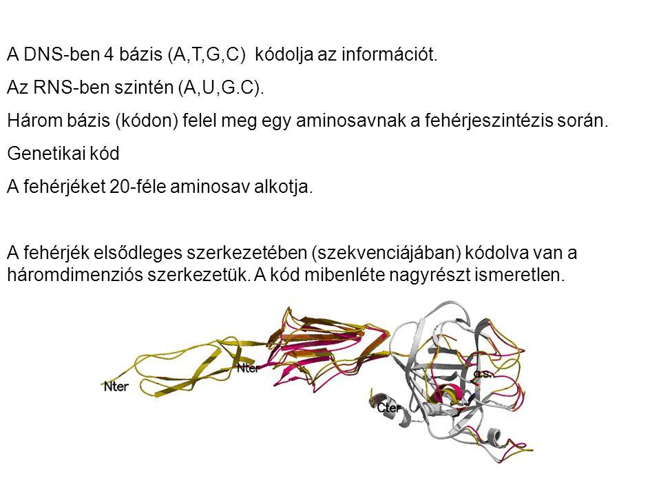 A DNS-ben 4 bázis (A,T,G,C) kódolja az információt.