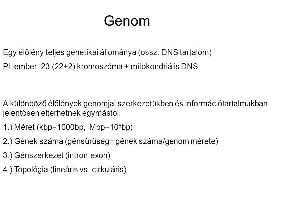 Genom Egy élőlény teljes genetikai állománya (össz. DNS tartalom)