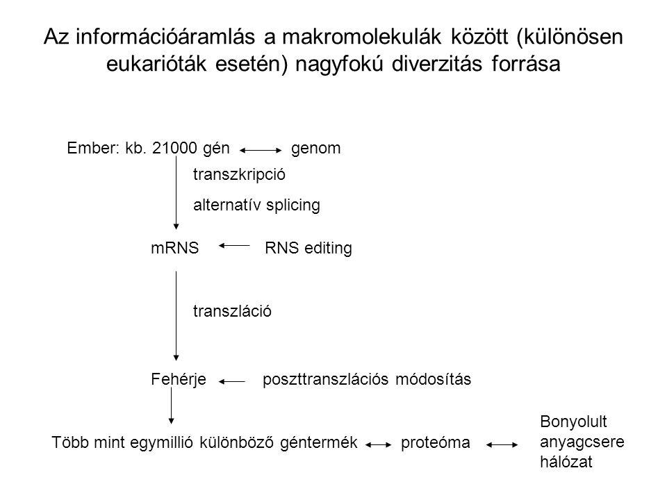 Az információáramlás a makromolekulák között (különösen eukarióták esetén) nagyfokú diverzitás forrása
