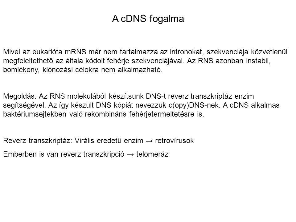 A cDNS fogalma
