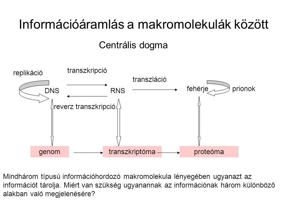 Információáramlás a makromolekulák között