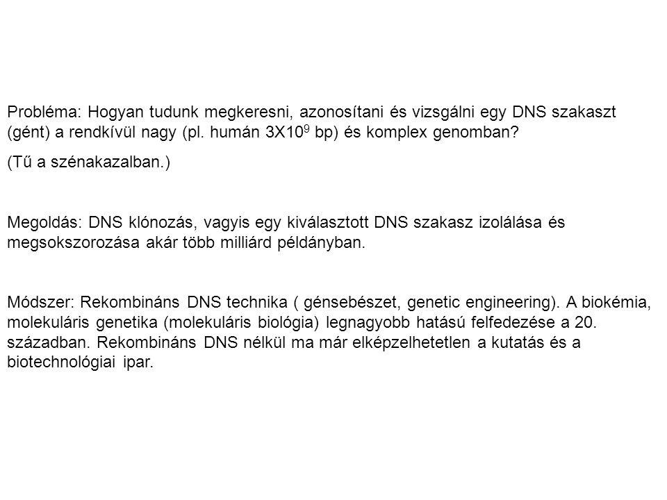Probléma: Hogyan tudunk megkeresni, azonosítani és vizsgálni egy DNS szakaszt (gént) a rendkívül nagy (pl. humán 3X109 bp) és komplex genomban
