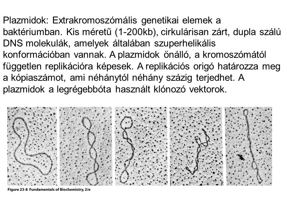 Plazmidok: Extrakromoszómális genetikai elemek a baktériumban