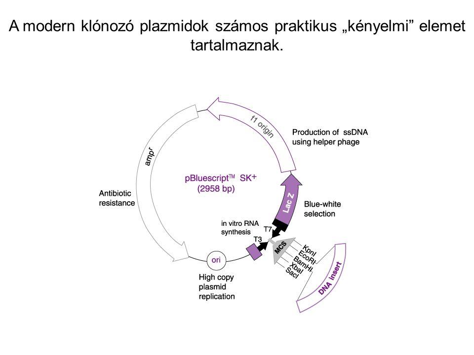 """A modern klónozó plazmidok számos praktikus """"kényelmi elemet tartalmaznak."""
