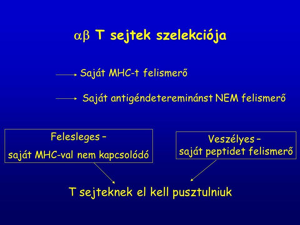  T sejtek szelekciója