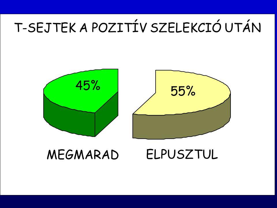T-SEJTEK A POZITÍV SZELEKCIÓ UTÁN