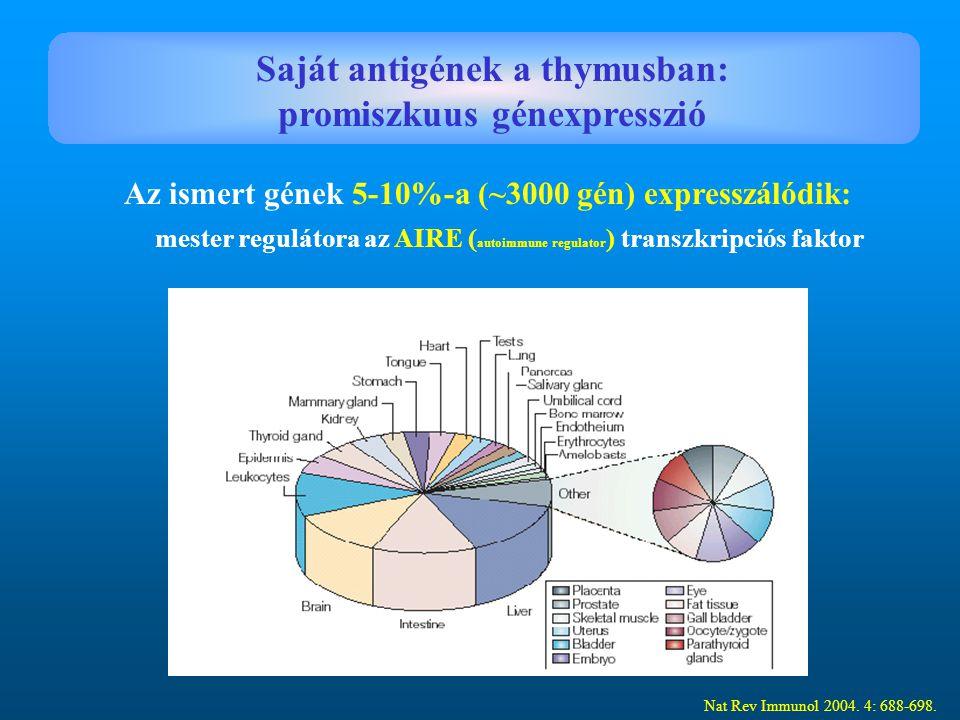 Saját antigének a thymusban: promiszkuus génexpresszió
