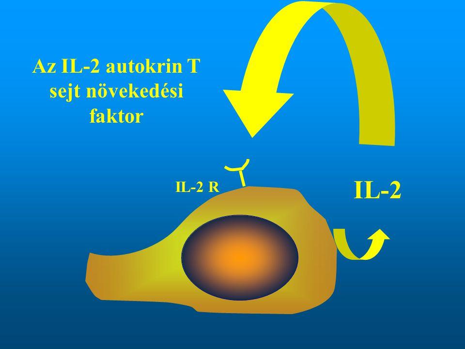 Az IL-2 autokrin T sejt növekedési faktor