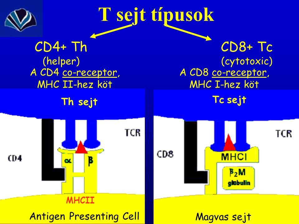 Antigen Presenting Cell