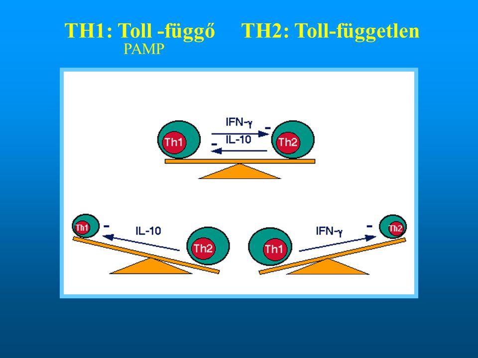 TH1: Toll -függő TH2: Toll-független