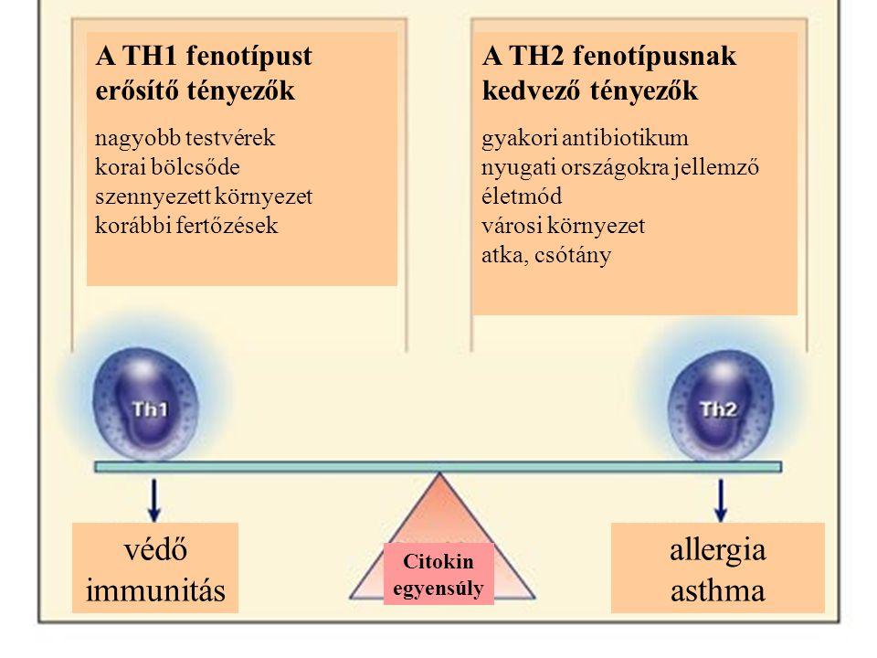 védő immunitás allergia asthma A TH1 fenotípust erősítő tényezők