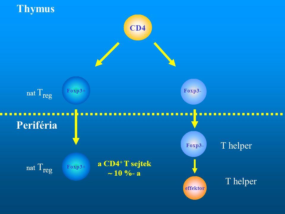 Thymus Periféria T helper T helper CD4 a CD4+ T sejtek  10 %- a