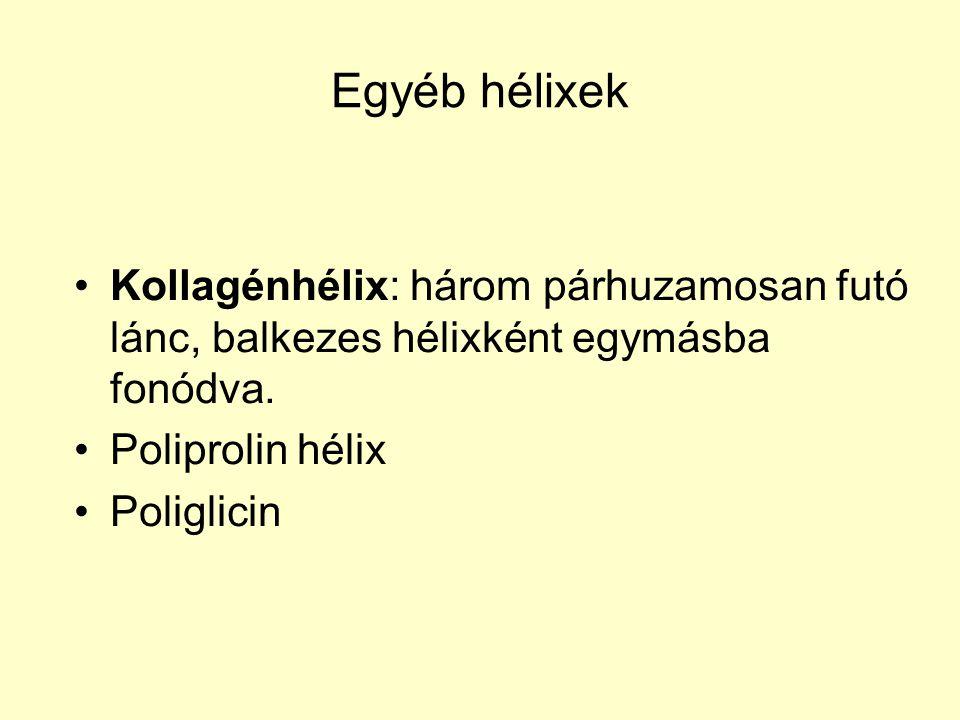Egyéb hélixek Kollagénhélix: három párhuzamosan futó lánc, balkezes hélixként egymásba fonódva. Poliprolin hélix.
