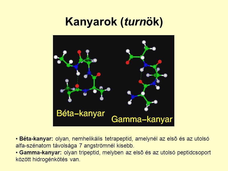Kanyarok (turnök) Béta-kanyar: olyan, nemhelikális tetrapeptid, amelynél az elsõ és az utolsó. alfa-szénatom távolsága 7 angströmnél kisebb.