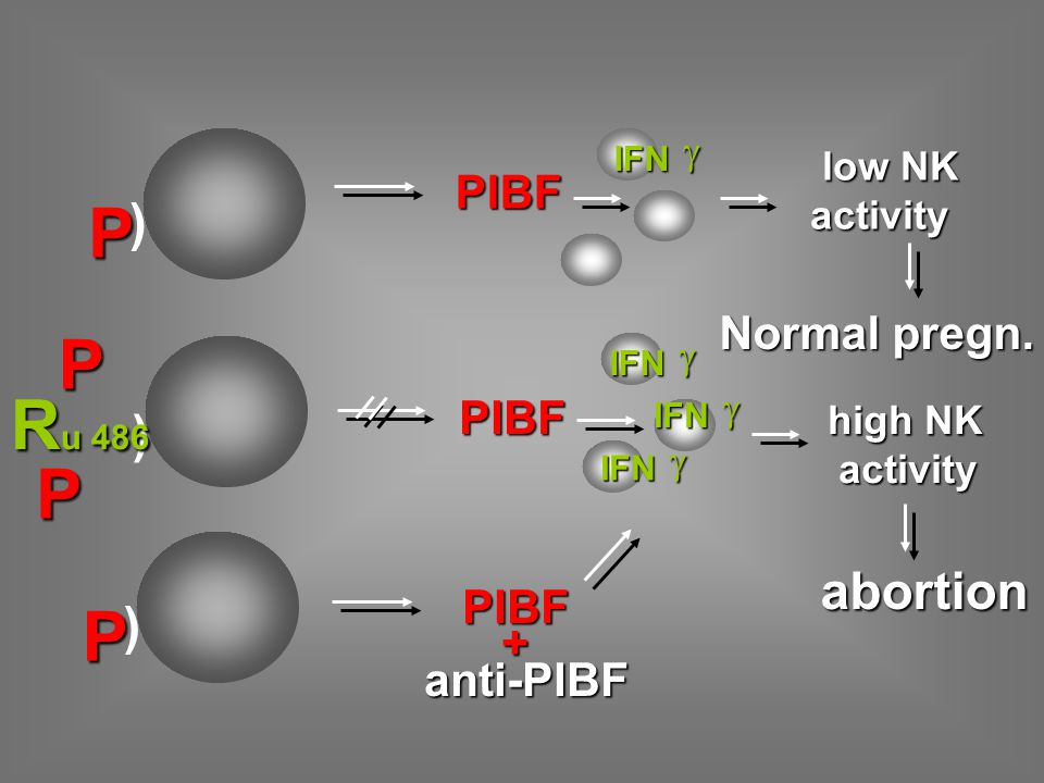P P Ru 486 P P ) ) abortion ) PIBF Normal pregn. PIBF PIBF + anti-PIBF