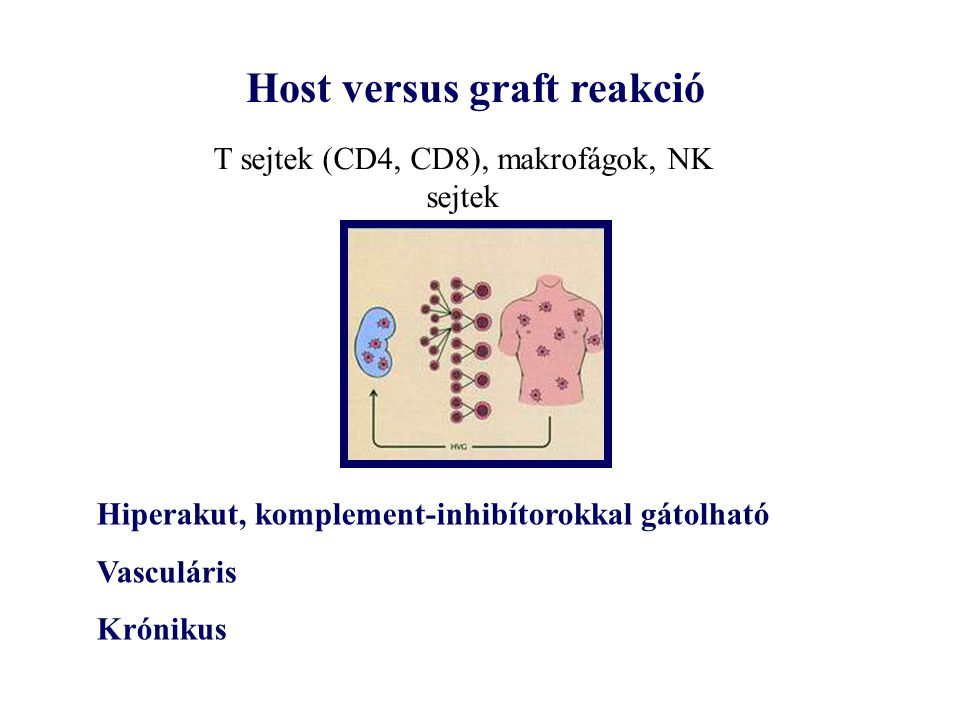 Host versus graft reakció
