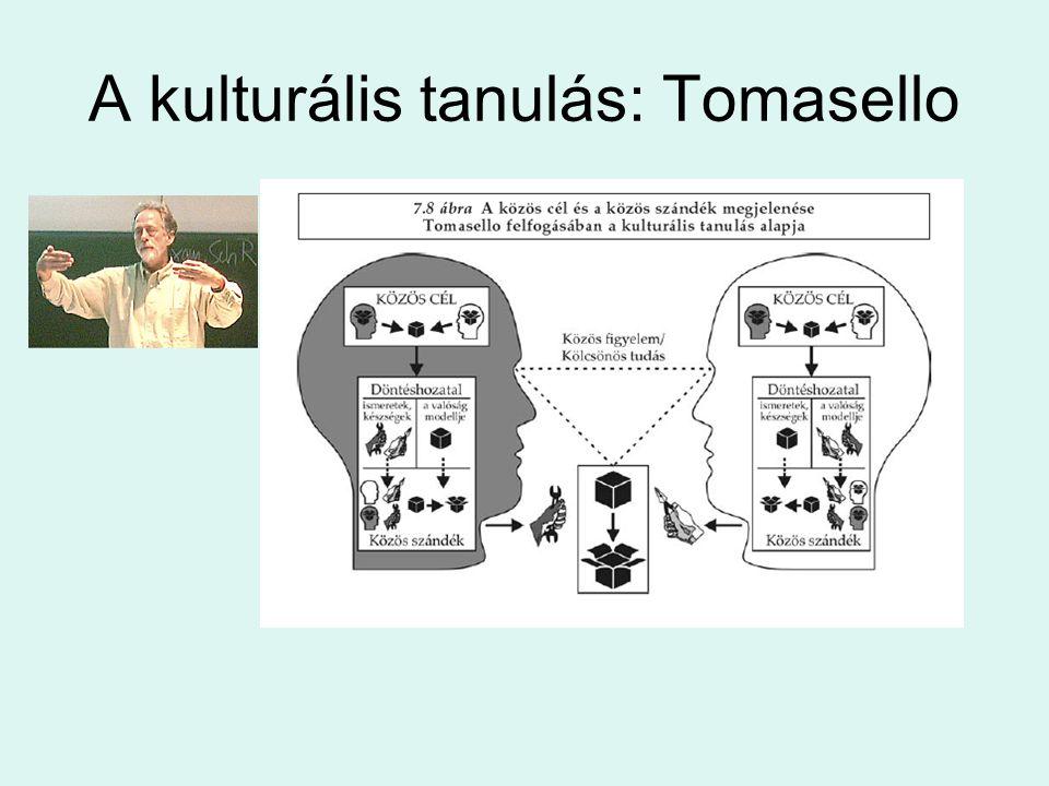 A kulturális tanulás: Tomasello