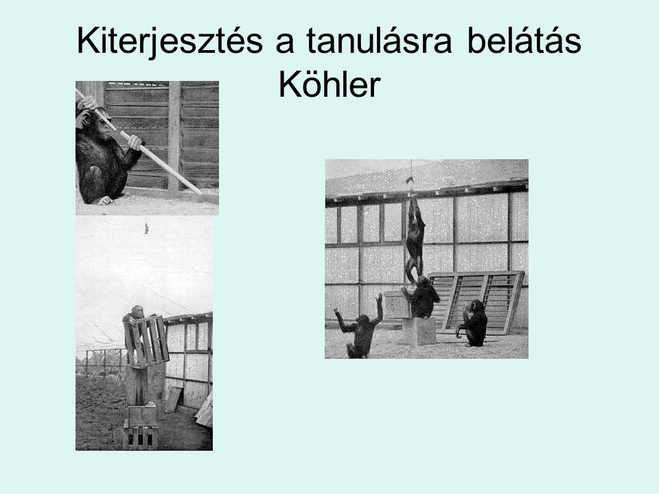 Kiterjesztés a tanulásra belátás Köhler