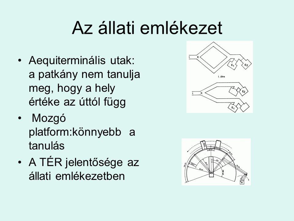 Az állati emlékezet Aequiterminális utak: a patkány nem tanulja meg, hogy a hely értéke az úttól függ.