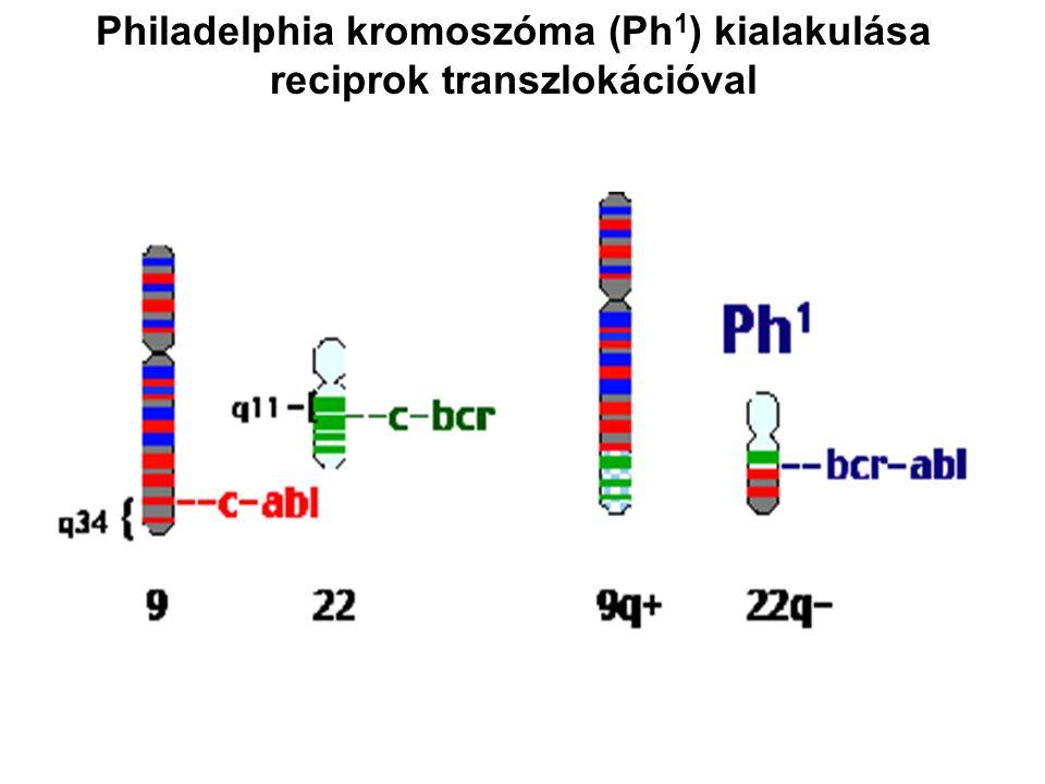 Philadelphia kromoszóma (Ph1) kialakulása reciprok transzlokációval