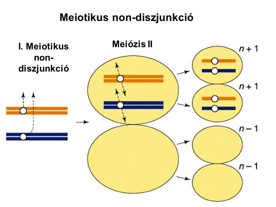 Meiotikus non-diszjunkció I. Meiotikus non-diszjunkció
